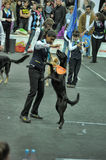 Trained dogs perform at the show  with trainers Stock Photos
