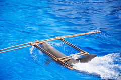 Trained Dolphin in a pool. Show with  dolphins in the water park Marineland , Spain Stock Image