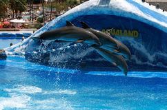 Trained dolphins jump in aquarium - Aqualand royalty free stock photo