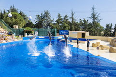 Trained Dolphins jumping in a pool Stock Photo