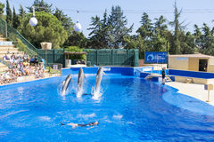 Trained Dolphins jumping in a pool royalty free stock photos