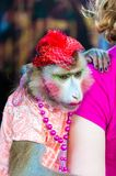 Trained dressed monkey posing with tourists Royalty Free Stock Photo