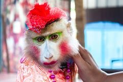 Trained dressed monkey posing with tourists Royalty Free Stock Photography
