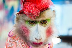Trained dressed monkey posing with tourists. In Thailand Stock Photography