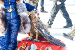 Trained eagle sitting on furs. In the background Stock Photography