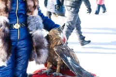 Trained eagle sitting on furs. In the background Royalty Free Stock Photography