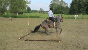 Trained horse. 