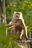 Trained monkey Stock Image