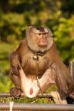 Trained monkey Stock Images