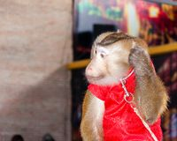 Trained monkey performing in circus Stock Photo