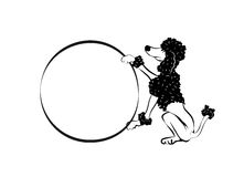Trained poodle with hoop Royalty Free Stock Photo