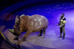 Trained rhino in the dress rehearsal of the circus program CircUS 2.0 in St. Petersburg, Russia Royalty Free Stock Photos