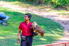 Trainer demonstrates big horned Owl. The Bird show at Jurong Bird Park in Singapore Stock Photo