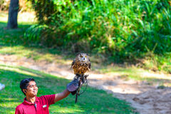 Trainer demonstrates big horned Owl Royalty Free Stock Images
