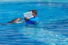 Trainer, der einem Delphin Festlichkeiten während des Trainings gibt lizenzfreie stockfotografie