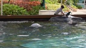 Trainer die de dolfijn strijkt in Seaworld 1