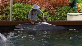 Trainer die en aardige dolfijn strijken kussen in Seaworld