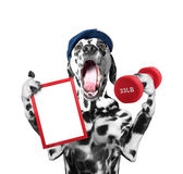 Trainer dog keeps frame and dumbbell Stock Images