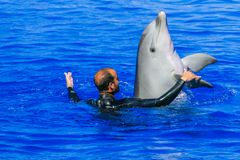 Trainer with dolphin dancing in water show stock photography