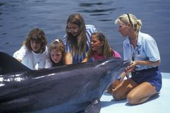 Trainer with dolphin and tourists, Theater of the Sea, Islamorada, FL Royalty Free Stock Image