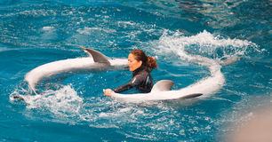 Trainer  and dolphins performing  in Dolphinarium Stock Photography