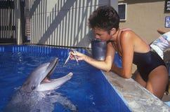 Trainer feeding dolphin, Magic Mountain, Los Angeles, CA Royalty Free Stock Photography