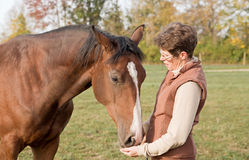 Trainer Feeding Horse Stock Photos