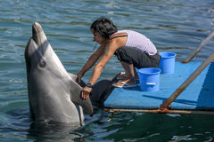 A trainer interacts with the dolphins she cares for in the harbour at Kas in Turkey. Stock Photography