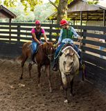 Breaking a filly to the saddle in florida Royalty Free Stock Photo
