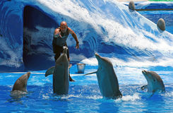 Trainer met dolfijnen - Aqualand Tenerife Royalty-vrije Stock Afbeeldingen