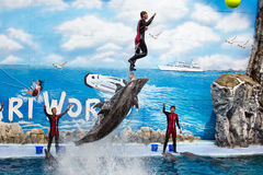 Trainer perform jumping with bottlenose dolphins Royalty Free Stock Photography