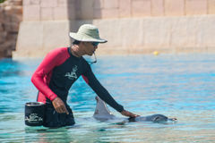 Trainer petting the dolphin Royalty Free Stock Photo