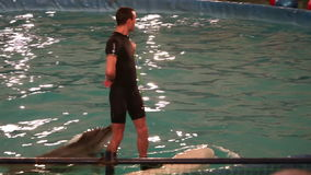 Trainer rides a beluga. Bottlenose dolphin jumping into moving hoop. Trainer rides a beluga. Bottlenose dolphin jumping into a moving hoop stock footage