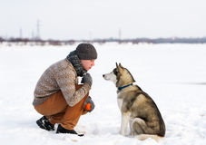 Trainer and Siberian huskies Royalty Free Stock Photography