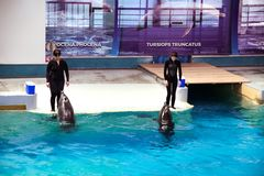 Trainers with dolphins in Dolphinarium show stock images