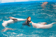 Trainers and dolphins performing  in Dolphinarium Royalty Free Stock Photography
