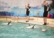 Trainers his hands and dolphins by flippers, greet the audience Royalty Free Stock Images