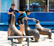 Trainers and sea lions performing  in Zoo of Barcelona Royalty Free Stock Photography