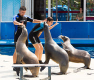 Trainers and sea lions performing  in Zoo Royalty Free Stock Photos
