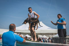 Trainers take dog to the swimming pool at Quattrozampeinfiera in Milan, Italy Stock Photography