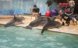 Trainers talk with dolphins - mother and two sons Stock Photo
