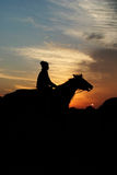Training. The horses at sunrise royalty free stock photography