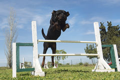 Training of agility Stock Image