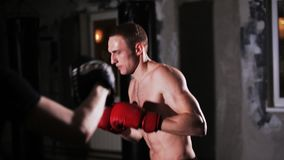 Training with a Boxing Coach. Young Man Punches The Focus Mitts In The Boxing Gym stock video