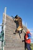 Training des Polizeihundes Stockbild