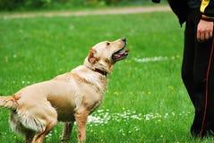 Training of the dog Royalty Free Stock Photos
