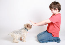 Training a dog. A child trying to train his new puppy Royalty Free Stock Image