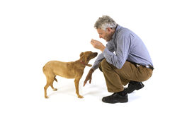 Training the dog obedience. Man is training his dog obedience Stock Photos