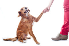 Training the dog to give five Stock Photo