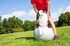 Training dog on Yoga ball. A dog owner helps his dog with stretching tecniques on a Yoga ball in the park.  Great to help older dogs maintain healthy joints and Stock Photography